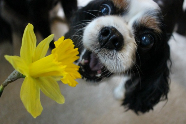 """Angie says """"Happy Spring!"""""""